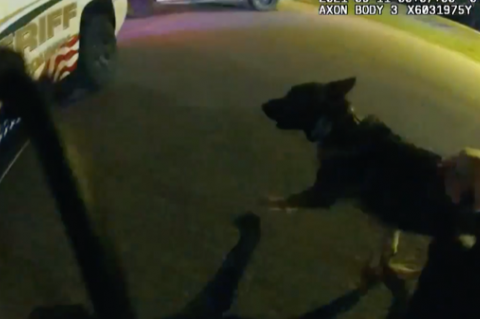 K-9 Ax returning to his patrol vehicle after being shot.